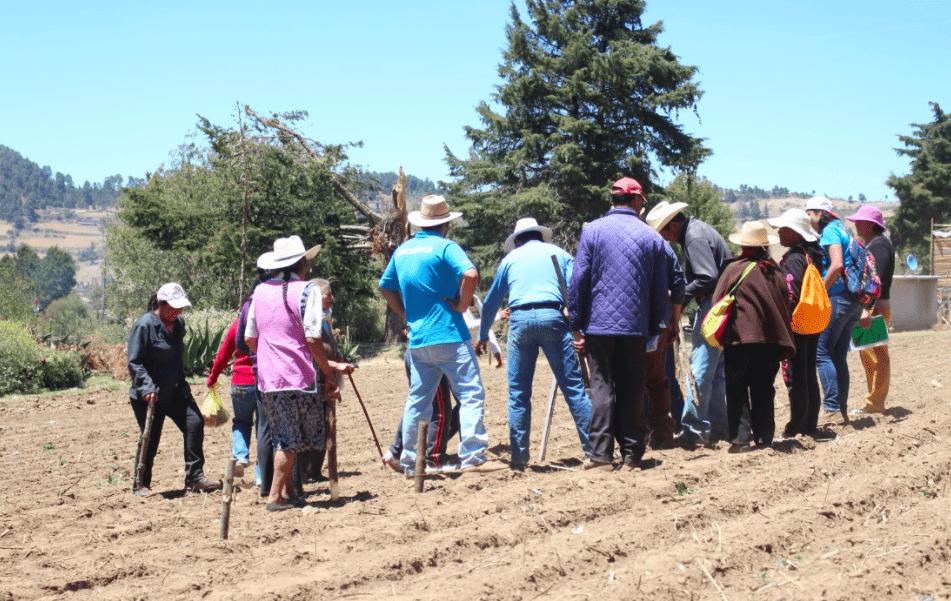Este año cumplimos 20 años de labor ininterrumpida por la regeneración y conservación de la cuenca Valle de Bravo-Amanalco. En este tiempo hemos regenerado 3,600 ha.